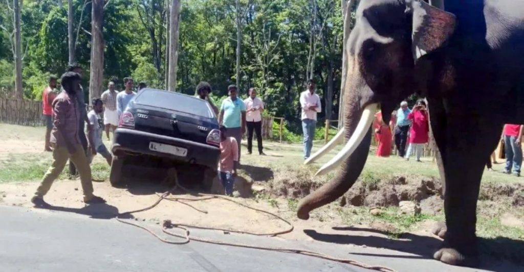 This elephant was used as a tow truck to pull a Maruti 800 out of a ditch.