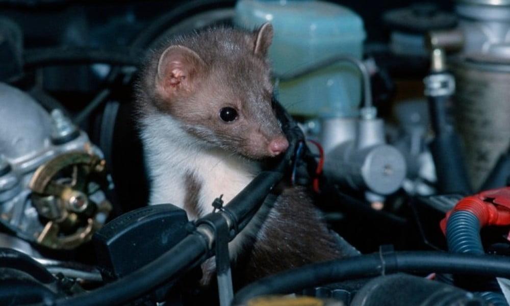 How Rats Engine Car